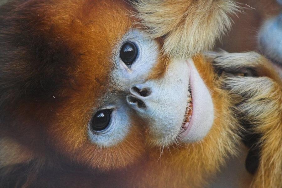 Удивительные животные, которых отфотошопила сама природа