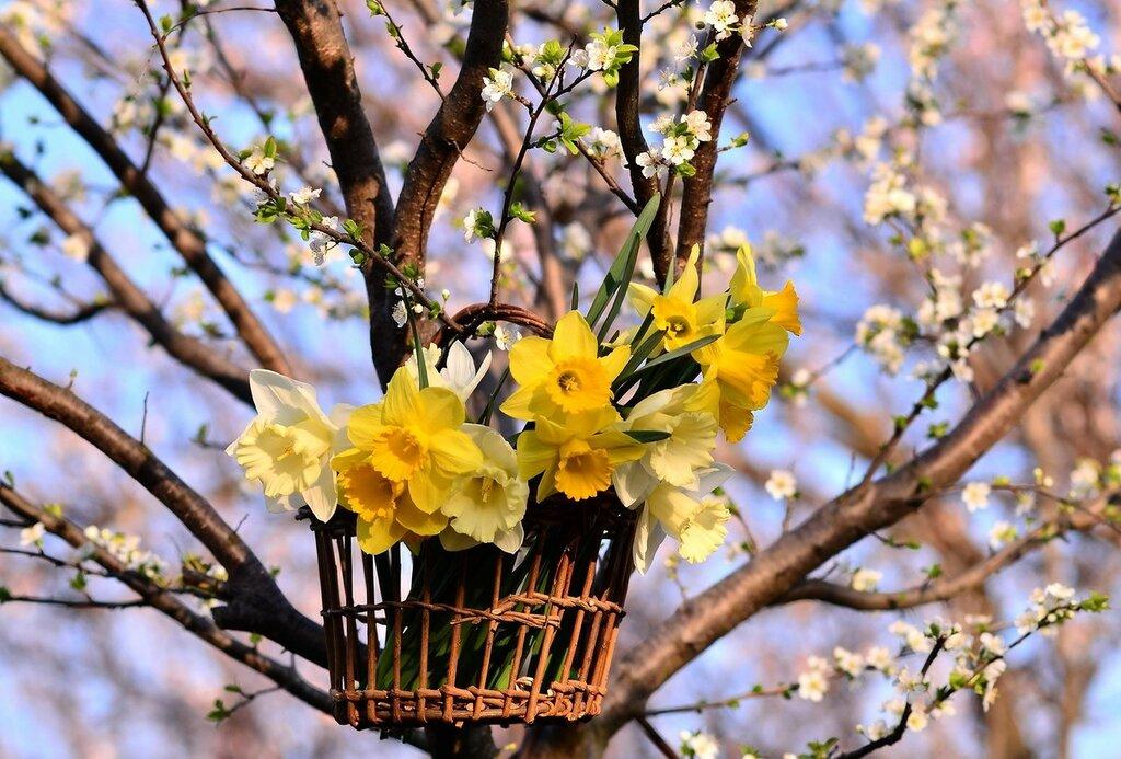 В объятиях весны...))