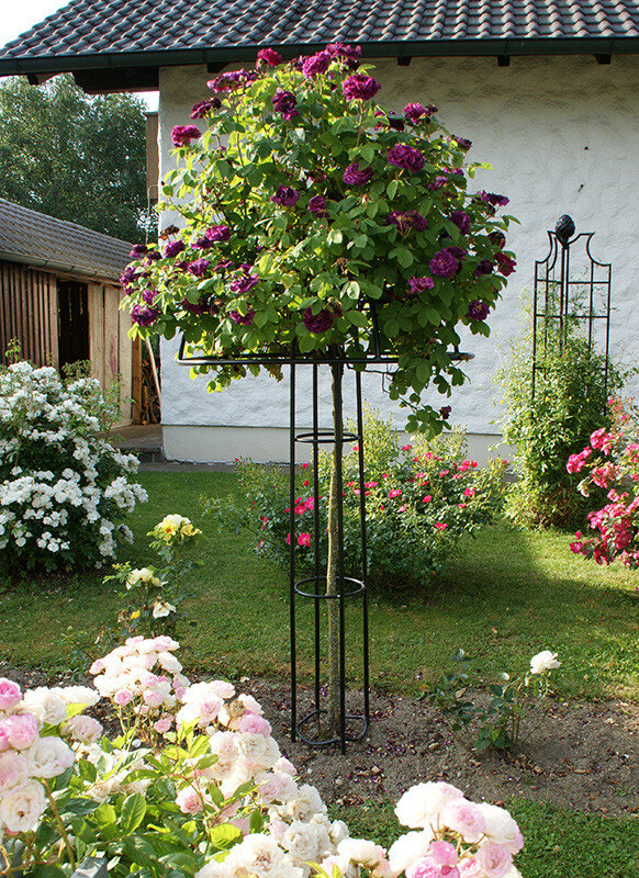Садовая опора-зонт.