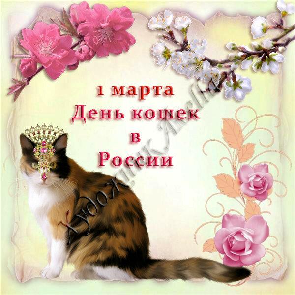 Поздравление с покупкой котенка 21