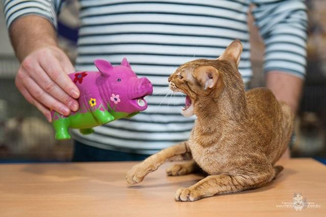 Кот и свинья.jpg