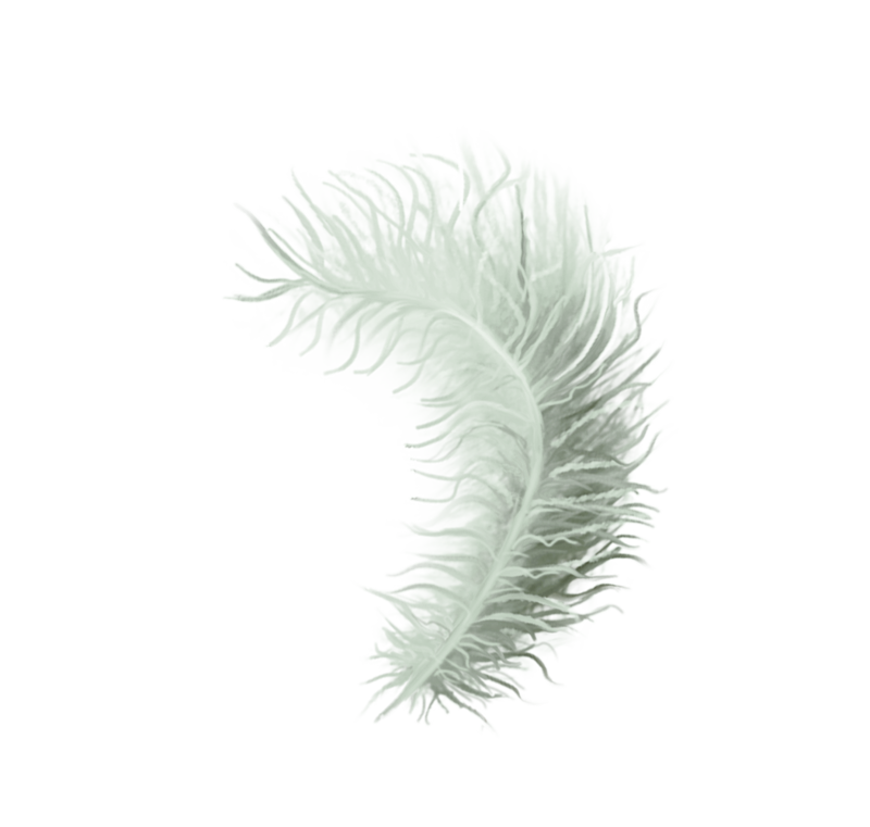 emeto_TheScaryPirates_feather white.png