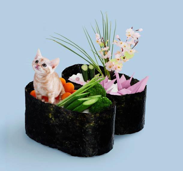 Sushi Cats by Tange & Nakimushi Peanuts