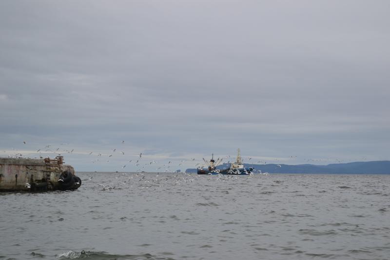 Камчатка - Курилы на лодке ПВХ