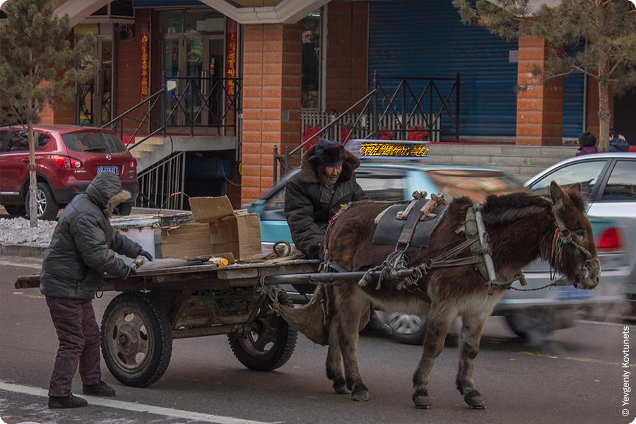 перевозка грузов с помощью животных в Маньчжурии