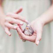 Птичка в руках