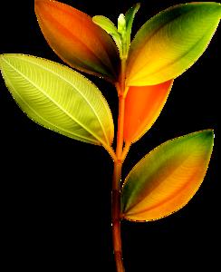 ветка с листьями