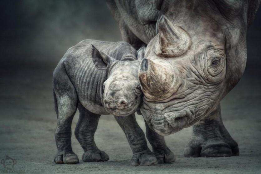 Узы матери и ребёнка. Автор фото: Мануэла Кульпа