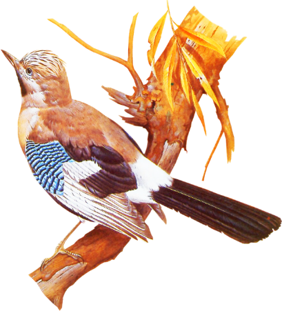 Bird09_dhedey.png