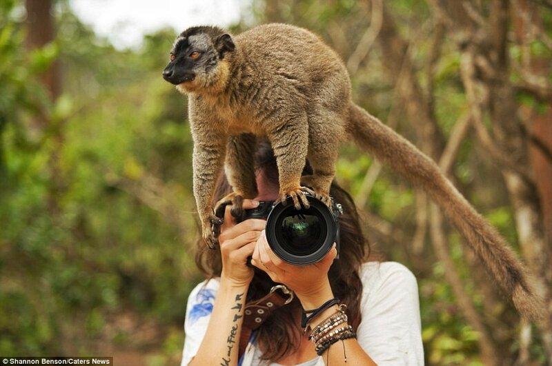 Больше всего неудобств фотографу доставляют животные, которые считают своим долгом взгромоздиться на её камеру.