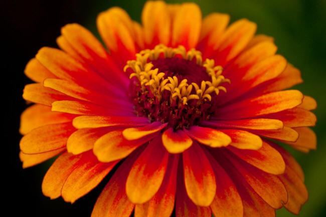 картинка помаранчевого квітки