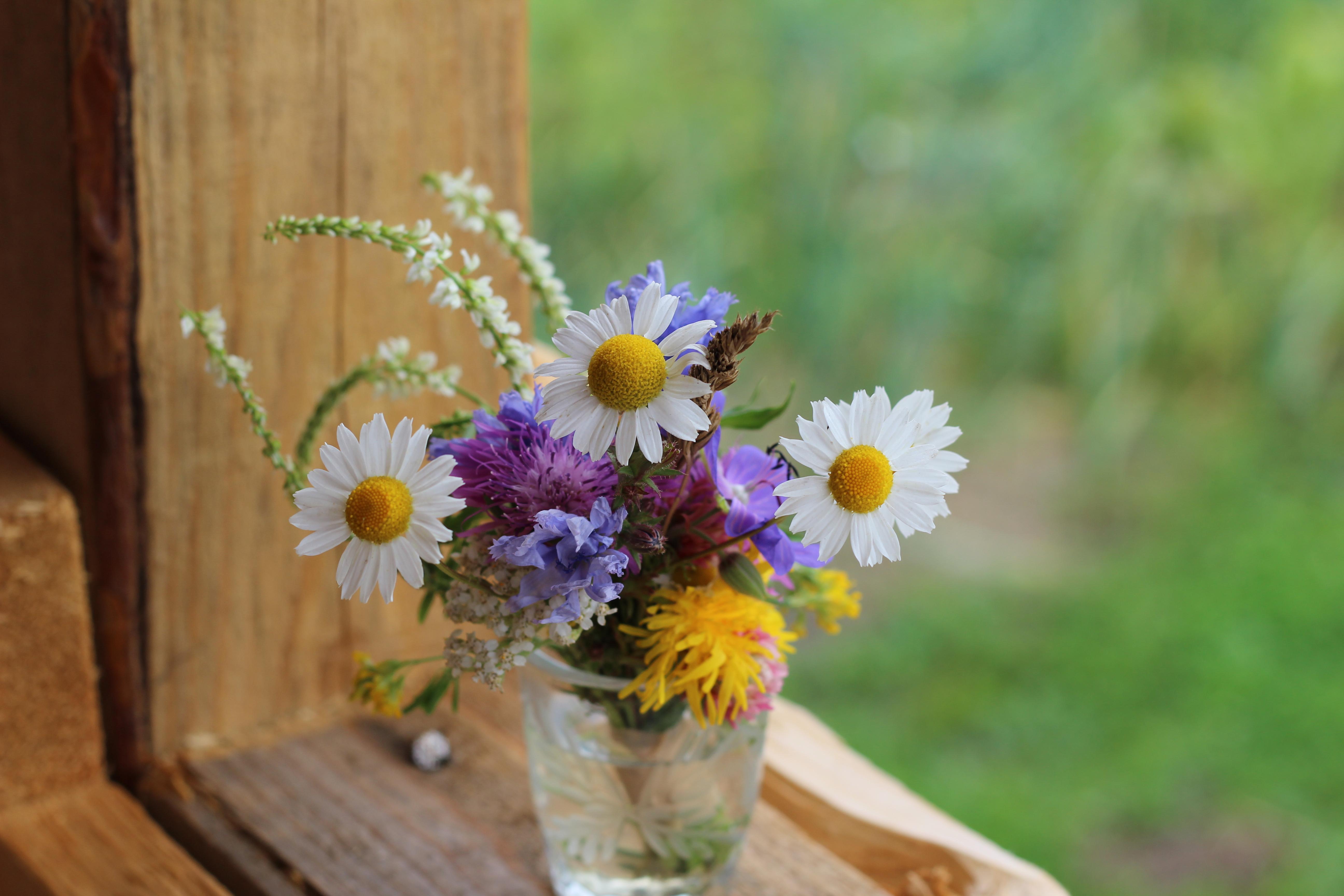 Срезке, фотографии букетов полевых цветов