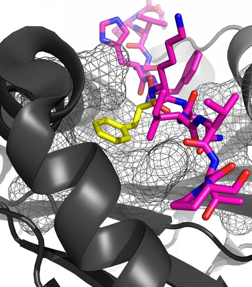 8. Студентка университета Принстона Меган Беллоус создала эту «мультяшную» репрезентацию пептида (фи