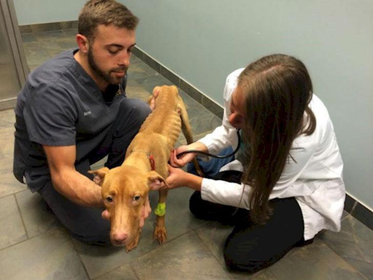 Эмми осматривают ветеринары.