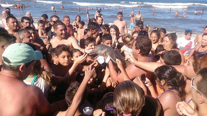 Туристы до смерти «заселфили» детеныша дельфина (4 фото)