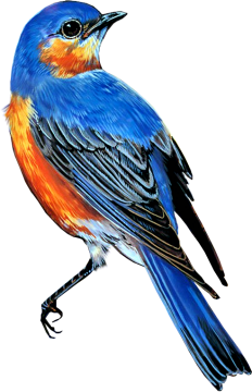 Bird41_dhedey.png