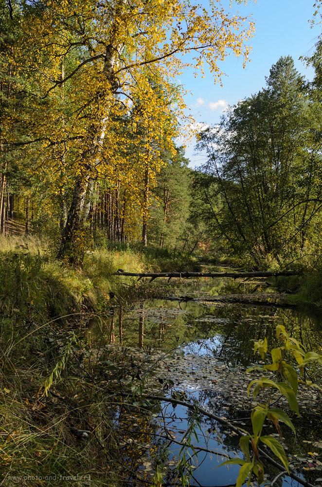Фотография 6. Бобры свалили деревья в парке Бажовские места. Вид по дороге к озеру Тальков камень. Еще есть вопросы, куда поехать на выходные на автомобиле недалеко от Екатеринбурга?
