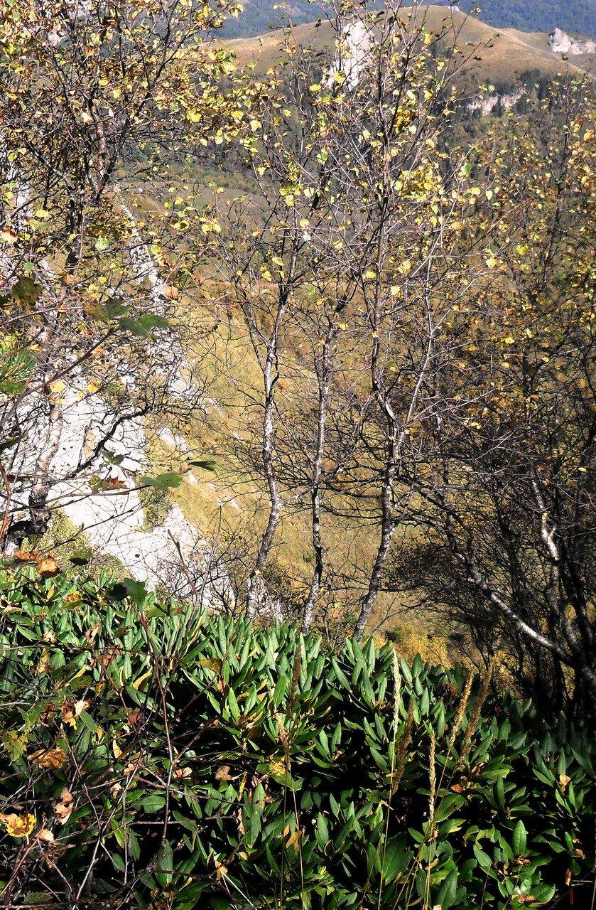 Осень... рододендрон на склоне... SAM_3347 - 1.JPG