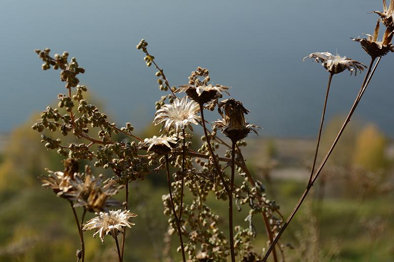 цветы из серебра