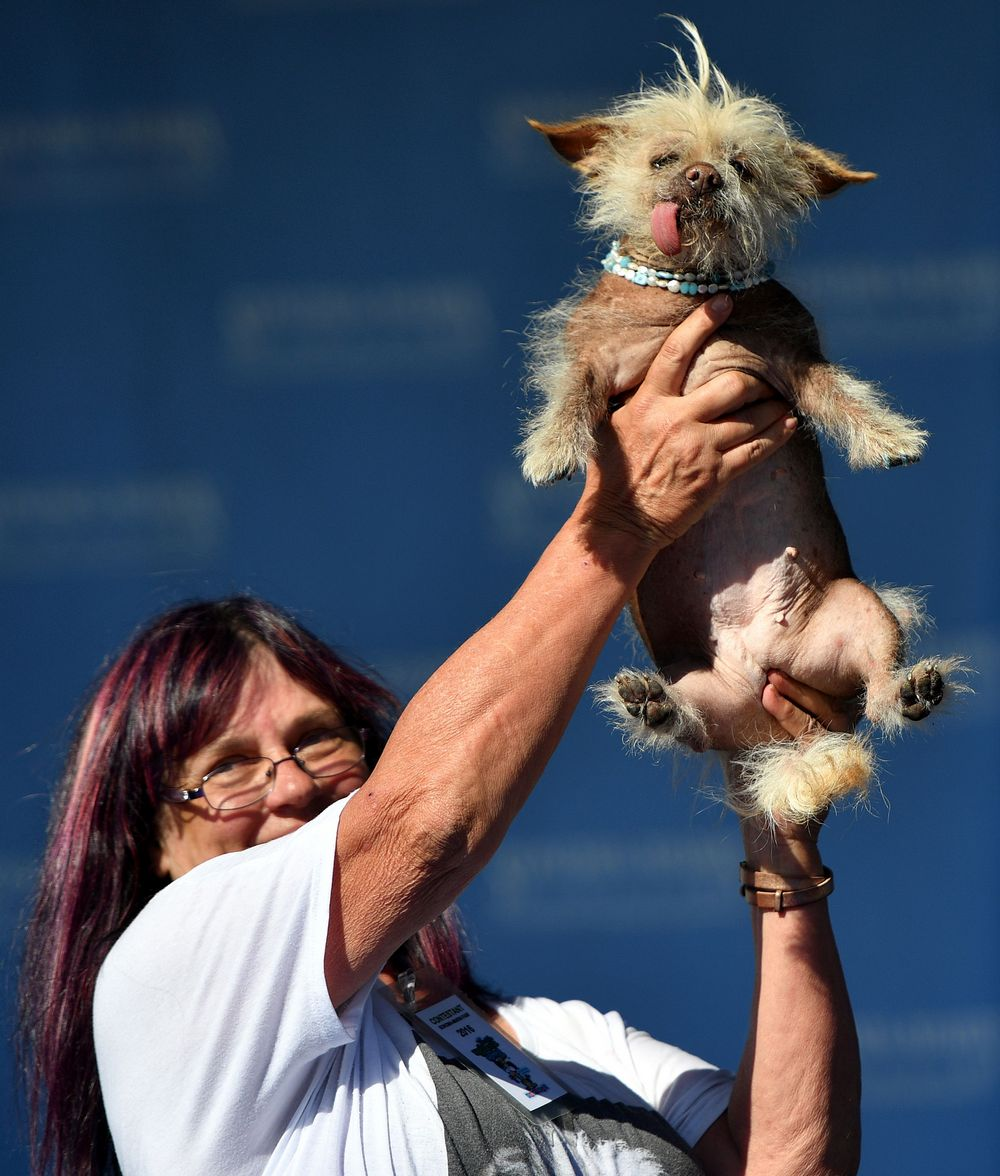 US-UGLY-DOG-ANIMAL