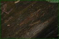 http://img-fotki.yandex.ru/get/38765/15842935.37b/0_eaa72_cad13330_orig.jpg