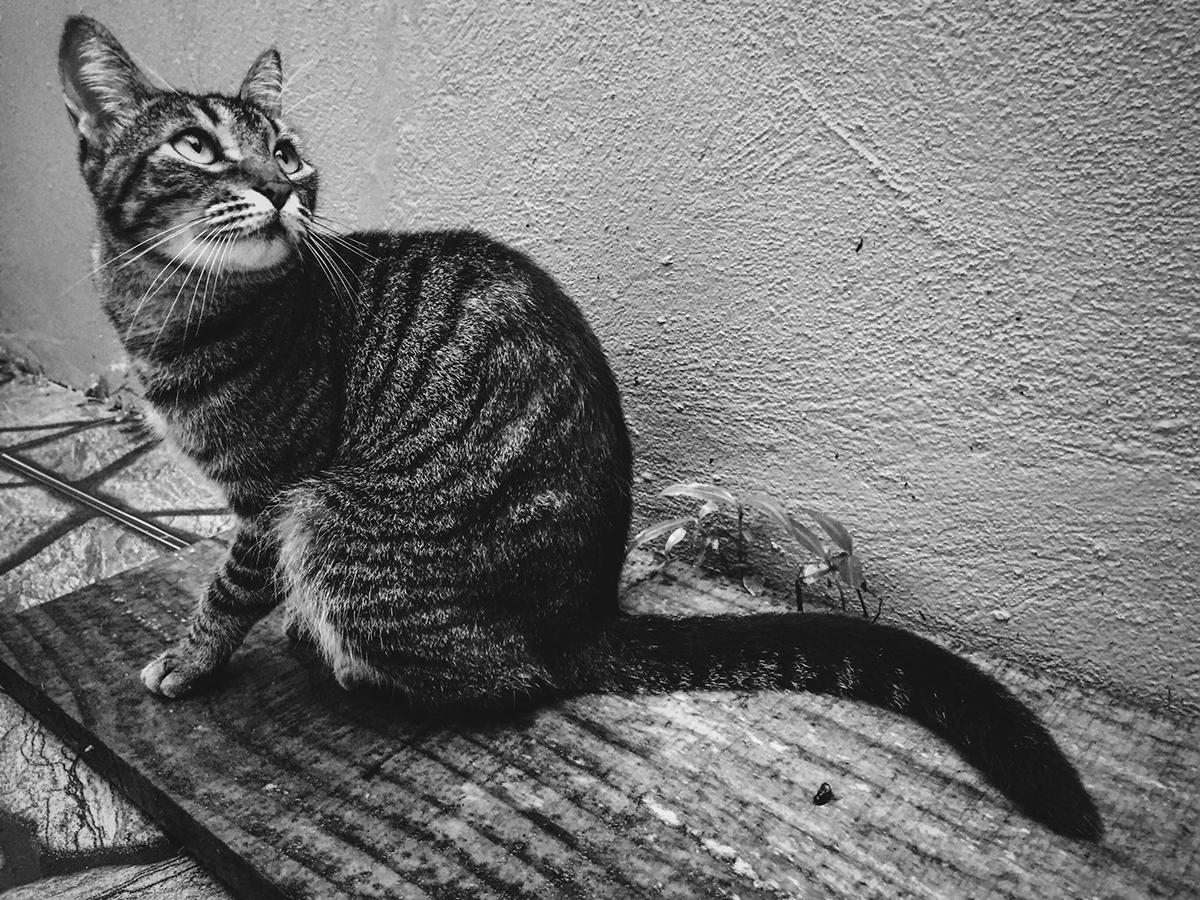 Cats Fabrício Leão