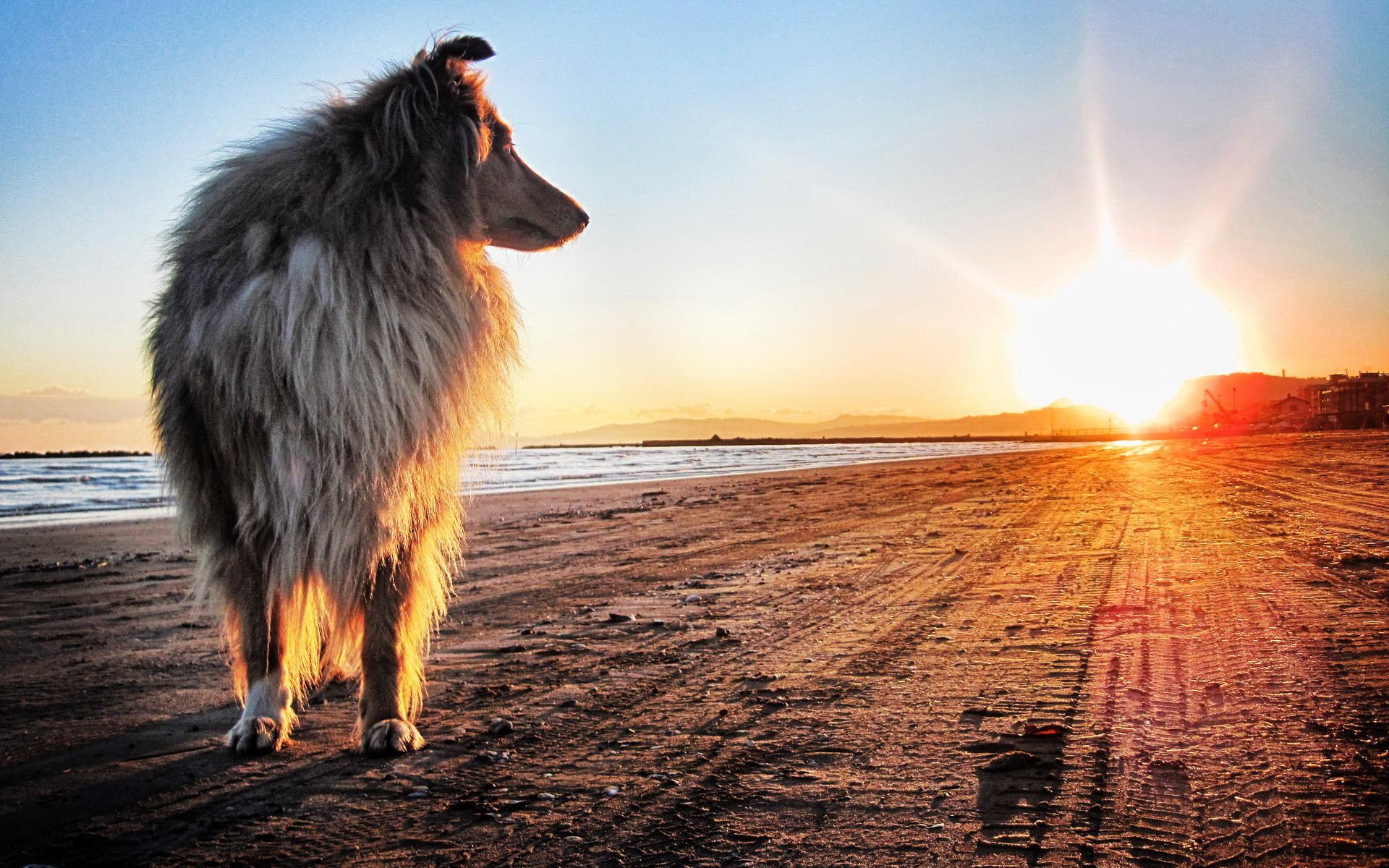 На заході сонця