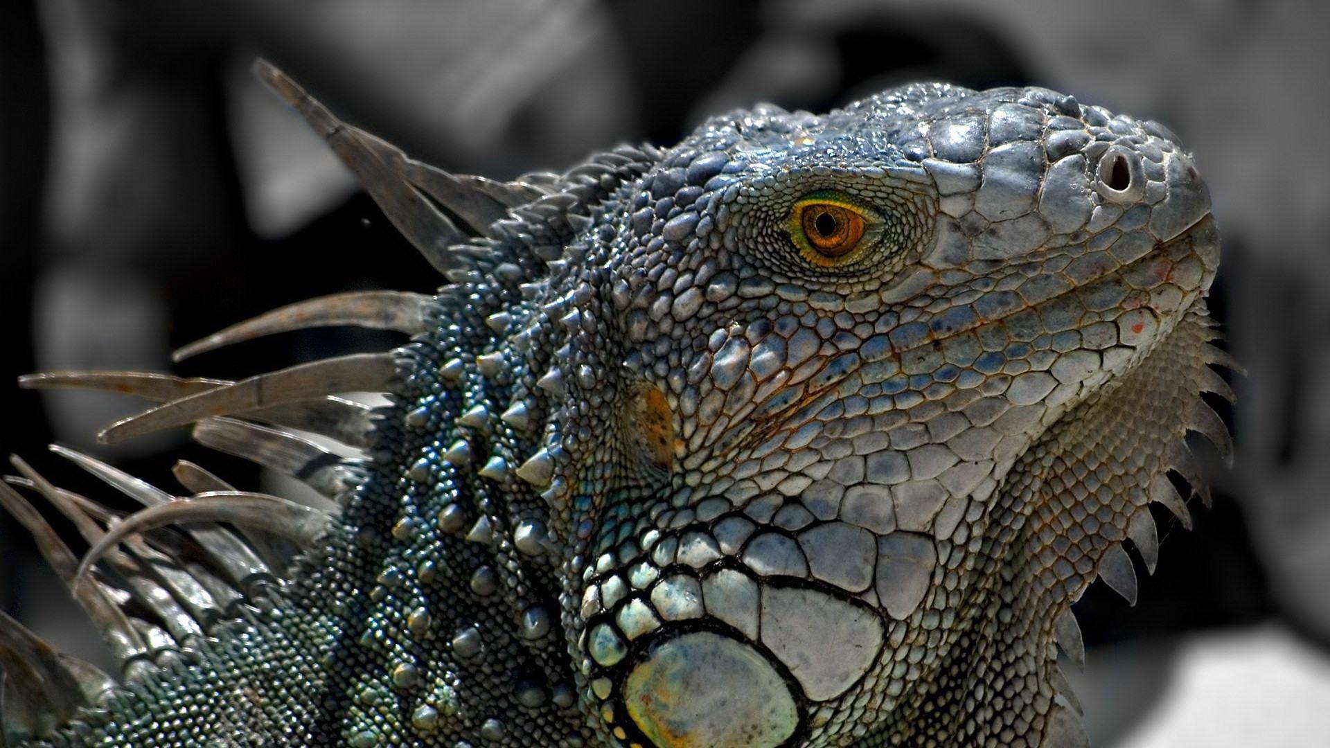 Цар рептилій
