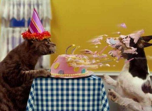 Красивое поздравление с днём рождения с котятами - Оригинальные живые открытки для любого праздника специально для Вас!