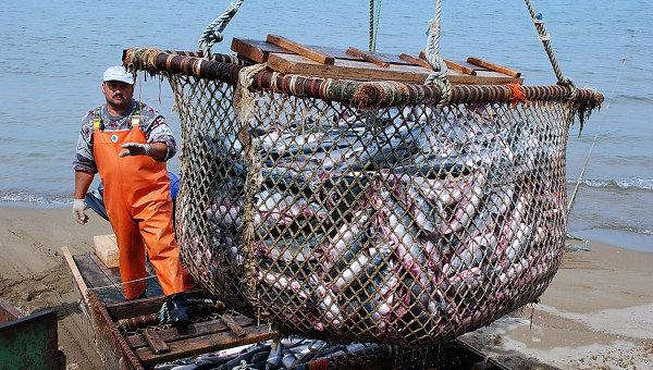 ВХабаровском крае готовятся побить рекорд предыдущего 2015 года повылову рыбы