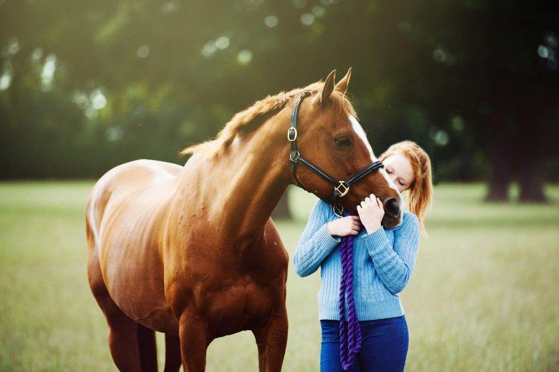 Ученые обучили лошадей «общаться» слюдьми