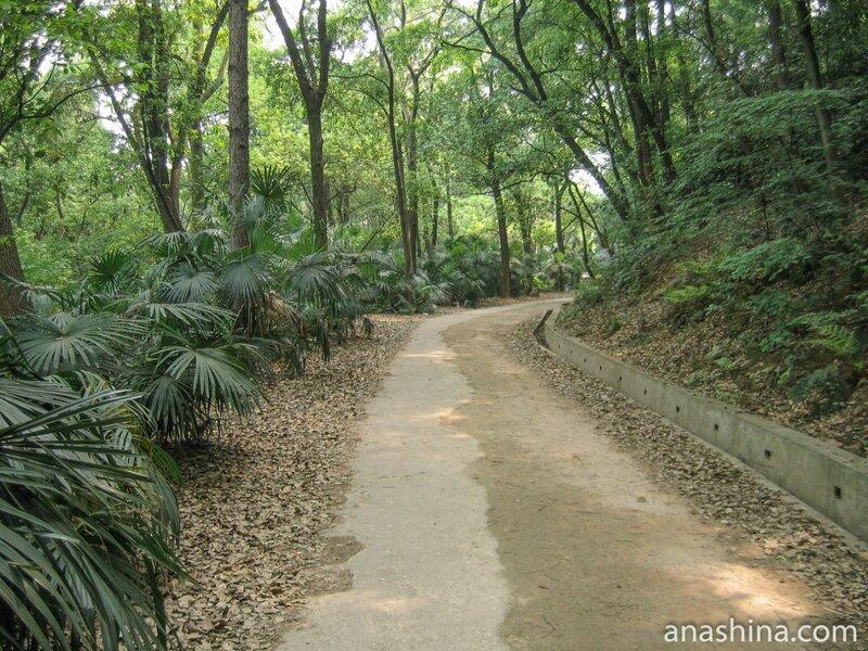 Парк на территории университета, Уханьский университет, Ухань