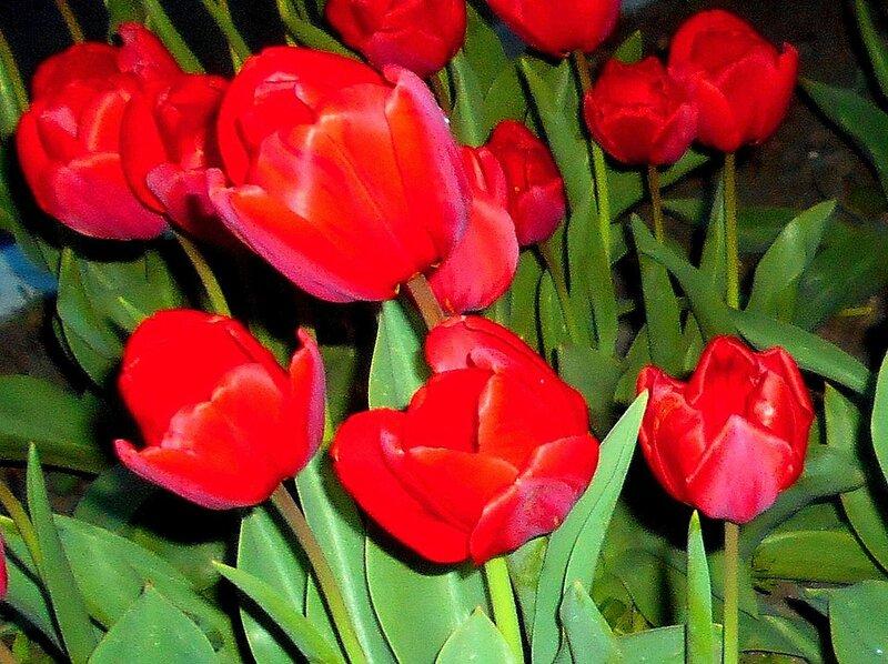 Апрельские признаки Весны.JPG