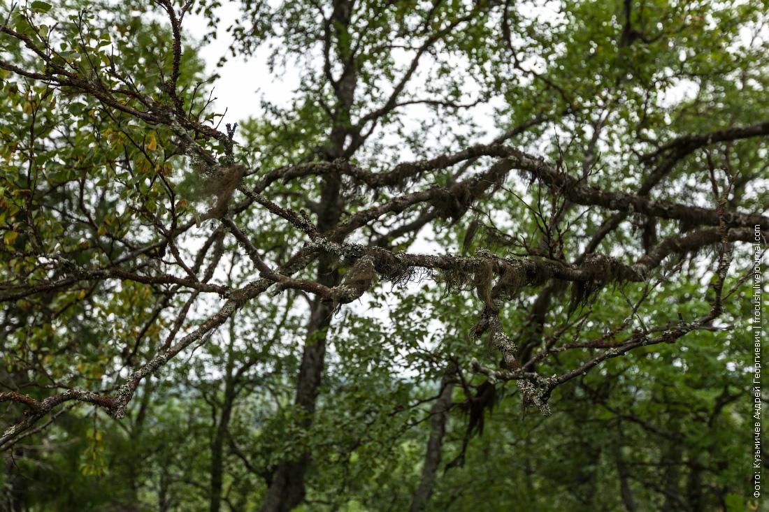 секирная гора на соловках