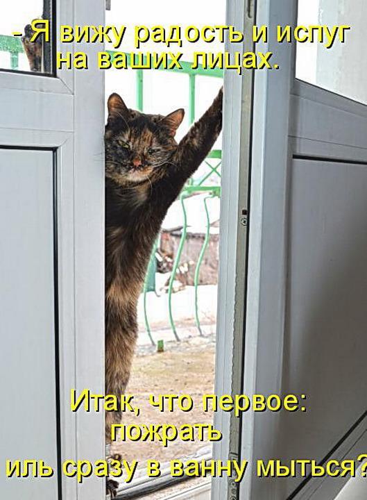 Кошки Фото с Надписью