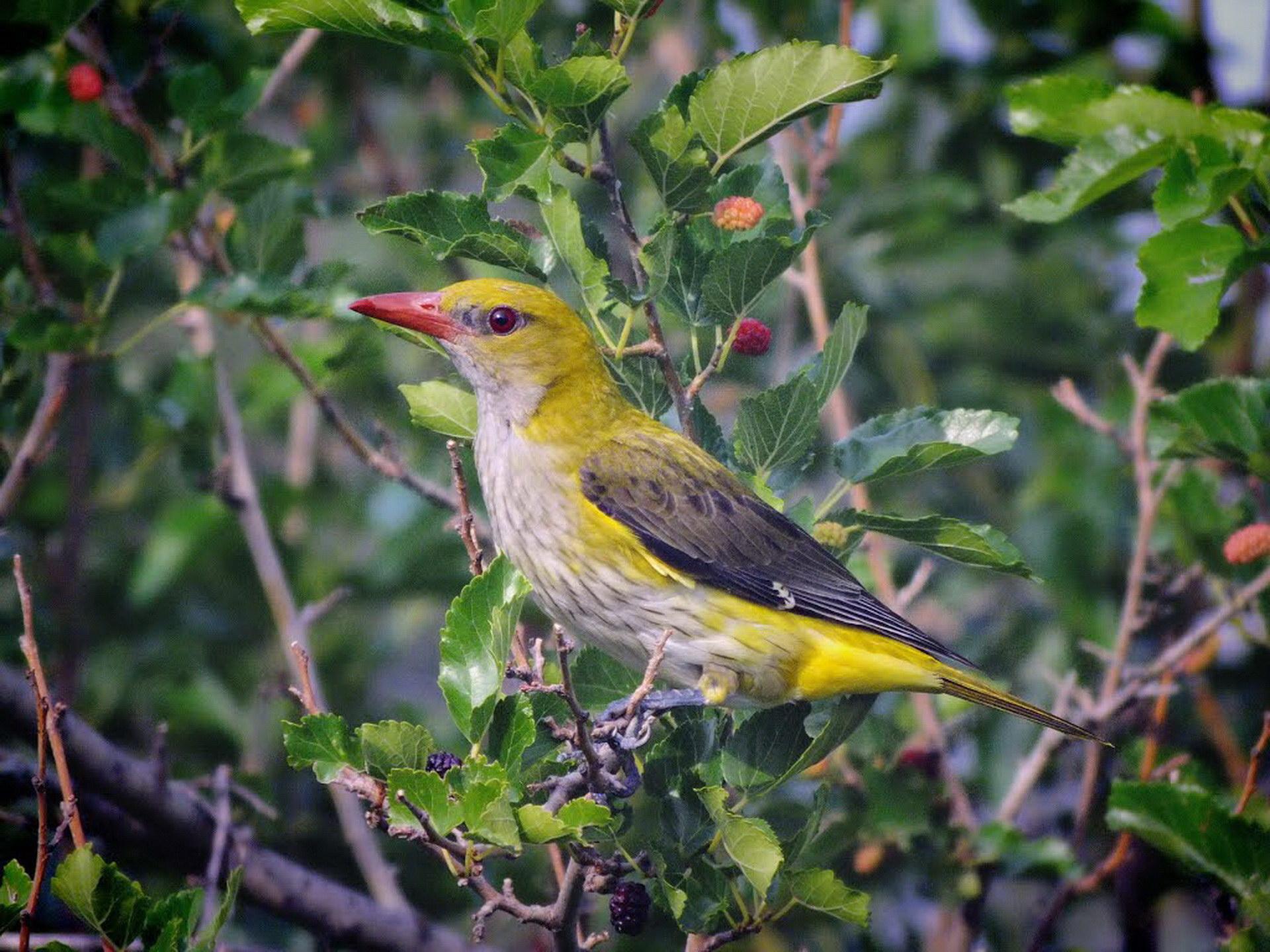 Жовта красуня