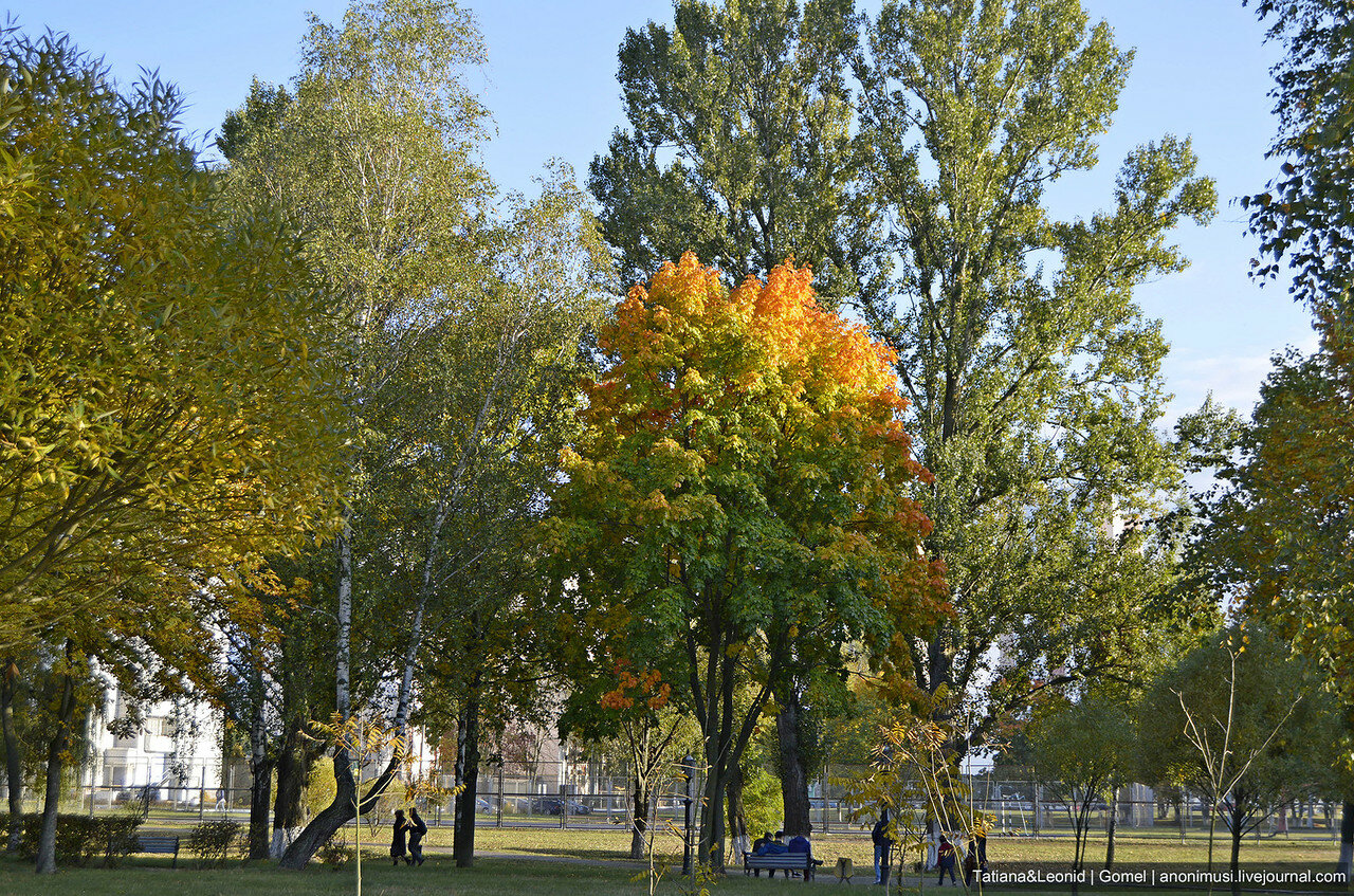 Осень в сквере Фестивальном