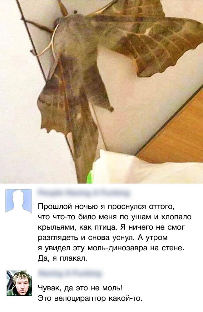 © reddit.com  Словом, все, учего есть крылья, может достигать размеров птеродактиля
