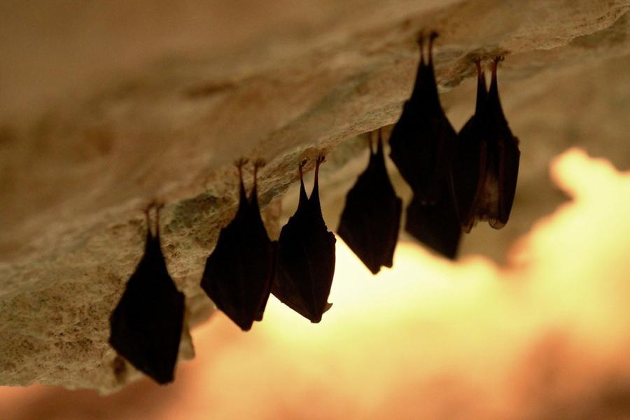 8. Летучие мыши в пещере в городе Микулов, Чехия, 9 марта 2015 года.