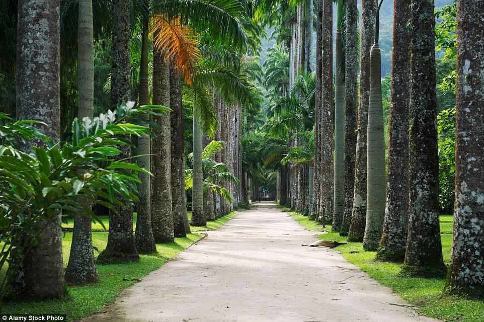 Бразилия известна своим богатейшим биоразнообразием, поэтому в Ботаническом саду Рио-де-Жанейро вы н