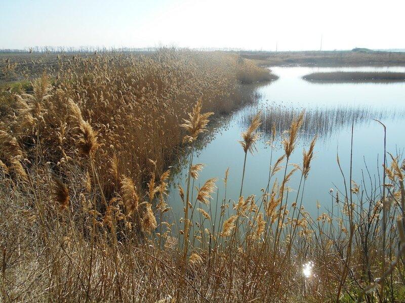 Краешек озера ... DSCN1435.JPG