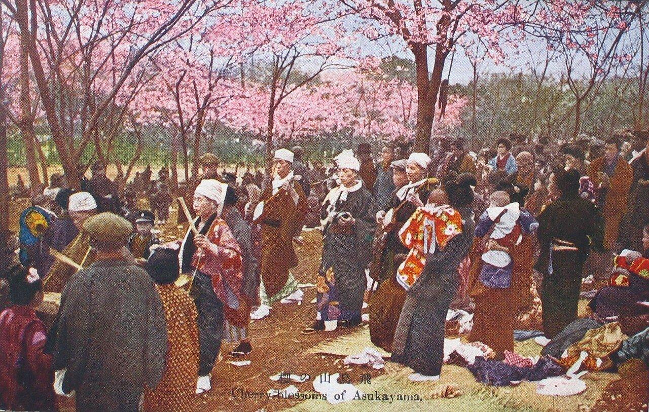 Токио. Асукаяма. Цветение вишни