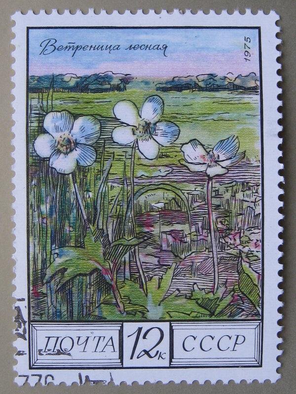 Ветреница лесная (Anemone sylvestris)