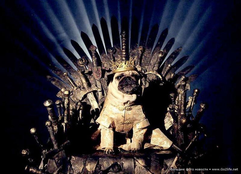 1422661708_11-game-of-thrones-cute-pugs.jpg