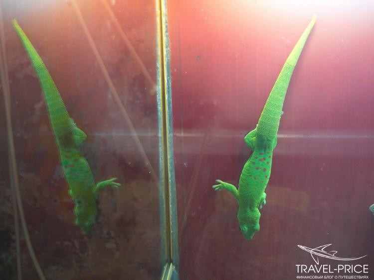 ящерицы в зоопарке Казани