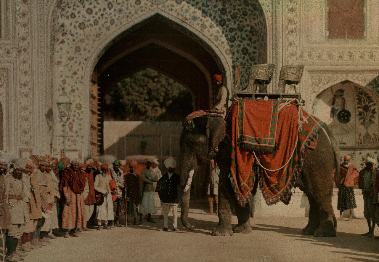 1930. Индия. Слон,  принадлежащий махарадже Джайпура