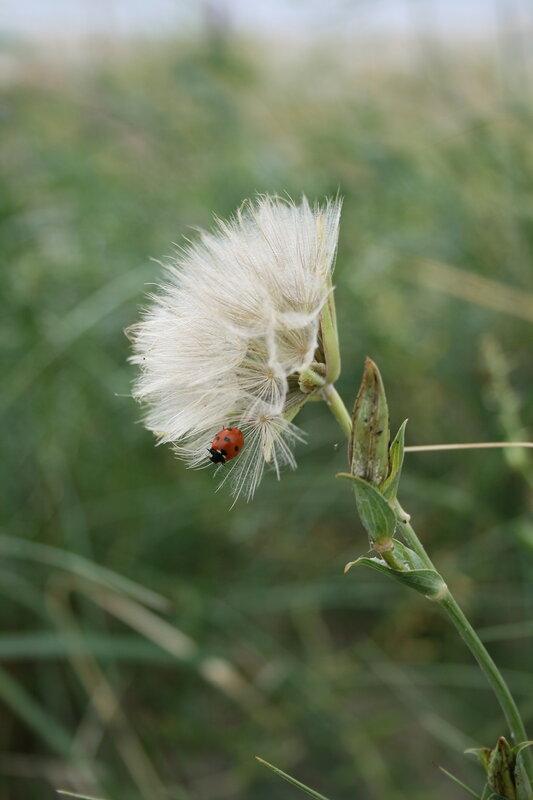 Природа Куршской косы