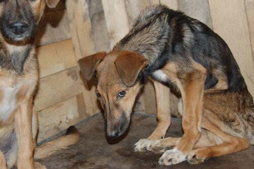 Может ли собаку парализовать после прививки