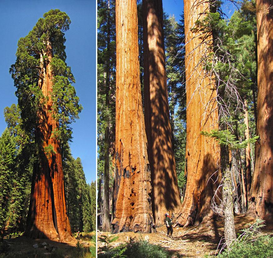sequoia_2x_Tin.jpg