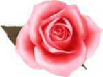 роза58.png